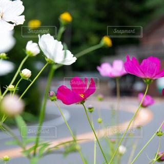 近くの花のアップの写真・画像素材[1476749]