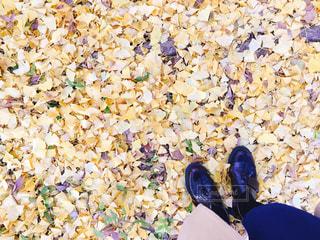落ち葉の絨毯の写真・画像素材[2623910]