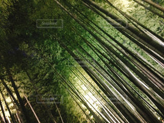 森林の写真・画像素材[2637766]