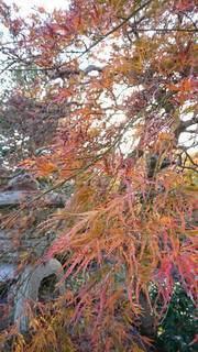 日本の秋の写真・画像素材[2626132]