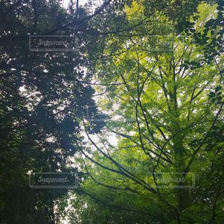 自然の写真・画像素材[2634441]