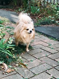 リードの上の小さな犬の写真・画像素材[2700744]