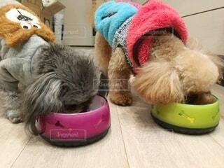 並んでご飯を食べる2匹の犬の写真・画像素材[4114894]