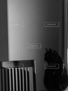 猫,動物,黒,ペット,人物,壁,座る,見つめる,ネコ,黒と白