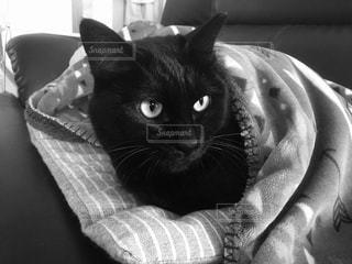 猫,動物,屋内,黒,ペット,人物,寒い,暖かい,まったり,ネコ,黒と白