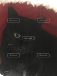 猫,動物,黒,ペット,人物,ネコ,甘えた顔