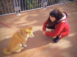 犬と会話する女の子の写真・画像素材[2728548]