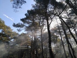森の朝の写真・画像素材[2635766]