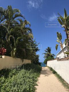 自然,風景,空,屋外,砂,海岸,樹木,道,ヤシの木,ハワイ,石,パーム,日中,ガーデン