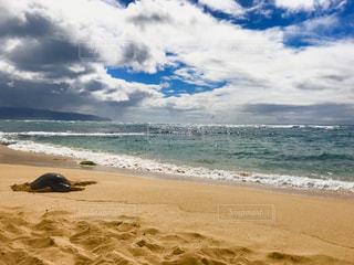 自然,風景,海,空,動物,屋外,砂,ビーチ,砂浜,水面,海岸,ハワイ,ウミガメ,海亀,日中