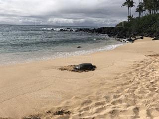 自然,風景,海,空,屋外,砂,ビーチ,砂浜,水面,海岸,ハワイ,ウミガメ,海亀,日中