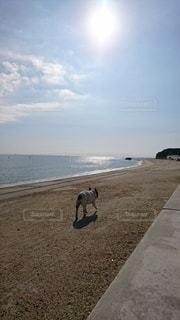 犬,海,空,動物,太陽,晴れ,晴天,砂浜,海岸,光,コンクリート,石,快晴