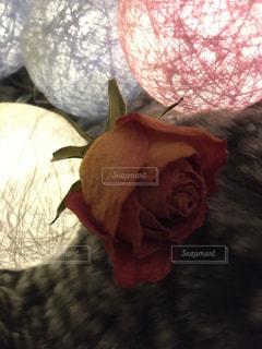 薔薇と光の写真・画像素材[2832892]