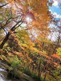 自然の写真・画像素材[2670151]
