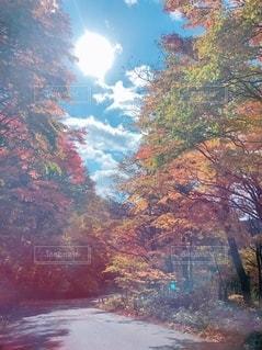 自然の写真・画像素材[2670345]