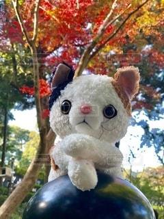 紅葉と猫の写真・画像素材[2648350]