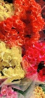 花のクローズアップの写真・画像素材[4174829]