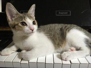 仔猫とピアノの写真・画像素材[2725364]