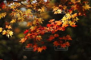 秋の写真・画像素材[2645720]