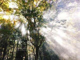 秋の木漏れ日の写真・画像素材[2670172]