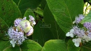 開花の写真・画像素材[3395573]