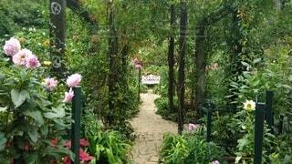 庭の植物の写真・画像素材[4336307]