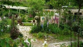 花園のクローズアップの写真・画像素材[4338434]