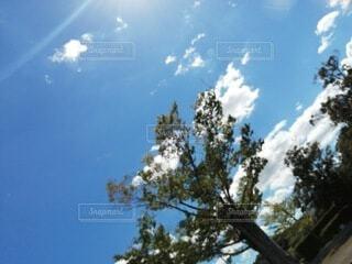 木のクローズアップの写真・画像素材[4842477]