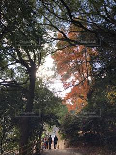 空,秋,後ろ姿,人物,背中,草木