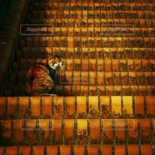 *階段と同化してる猫*の写真・画像素材[2739687]