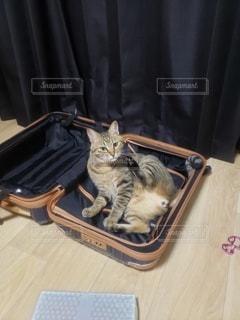 猫,動物,屋内,ペット,人物,ネコ