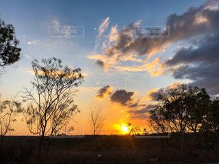 自然,風景,空,夕日,木,屋外,太陽,雲,綺麗,夕焼け,夕暮れ,景色,オレンジ,光,草,樹木,太陽光,日の出,草木