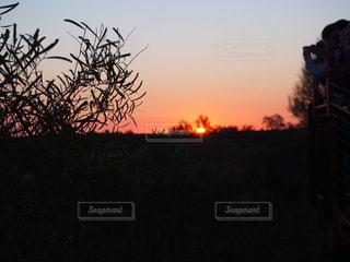 自然,風景,空,木,屋外,太陽,綺麗,夕暮れ,景色,オレンジ,光,樹木,太陽光,明るい,草木,クラウド