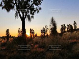 自然,風景,空,木,屋外,太陽,綺麗,夕暮れ,景色,オレンジ,光,草,樹木,太陽光,ヤシの木,草木