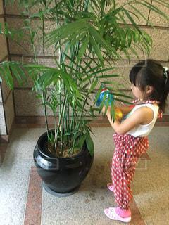 観葉植物にお水をあげている小さな女の子の写真・画像素材[2723316]
