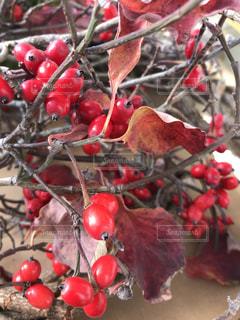 クリスマスリースのお飾りの写真・画像素材[2756085]
