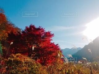 秋の光の写真・画像素材[2673393]