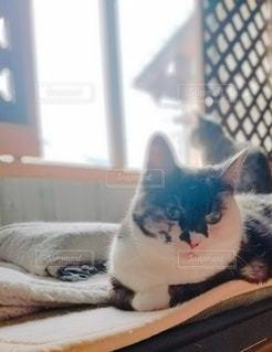 猫と暮らすの写真・画像素材[2704938]
