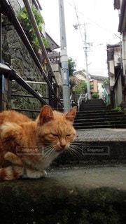 階段で一休みの写真・画像素材[2739174]