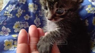 小さな手の写真・画像素材[3361143]