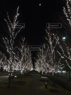 夜の写真・画像素材[2678461]