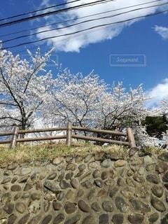 空,花,春,桜,屋外,樹木
