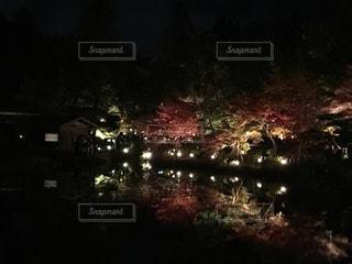 夜の紅葉の写真・画像素材[2669080]