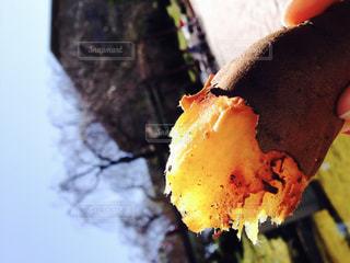 まいと楽しみな焼き芋の写真・画像素材[2669478]