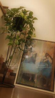 階段の観葉植物の写真・画像素材[2726567]
