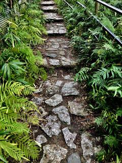 山の散歩道シダに囲まれた階段の写真・画像素材[2748896]
