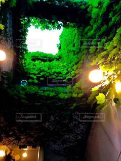 天井にはう、観葉植物の写真・画像素材[2754591]