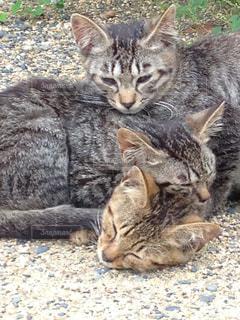 地面に横たる猫!3匹可愛いの写真・画像素材[2795363]