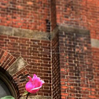 大きな赤レンガの建物と薔薇一輪の写真・画像素材[2826299]
