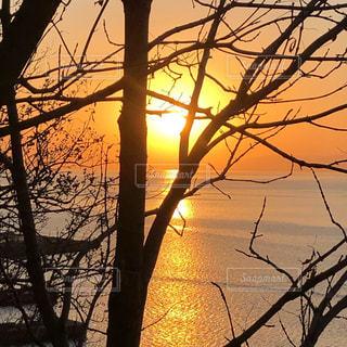 自然,空,太陽,夕暮れ,シルエット,光,樹木,草木,ウラジオストクの夕日